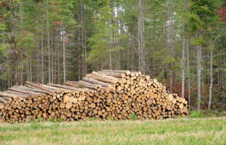 Il est inconcevable de mettre fin à la protection des forêts à cause de la COVID-19