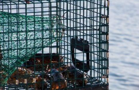 La fermeture de l'usine Les Crustacés de Gaspé, une vraie honte pour la Gaspésie.