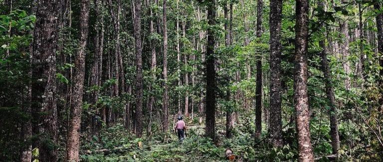 René Martel seul dans les bois. Il est loin et est très petit par rapport aux arbres.