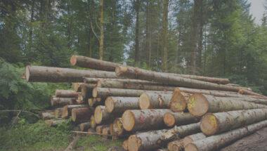 L'industrie forestière ne pourra pas redémarrer comme elle était avant la crise