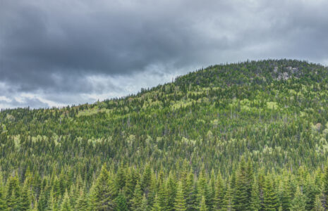 Le secteur forestier doit faire partie de la relance verte d'Ottawa
