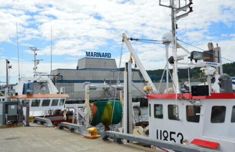 La ministre Lebouthillier incapable de rassurer les travailleuses et les travailleurs des usines de crevettes