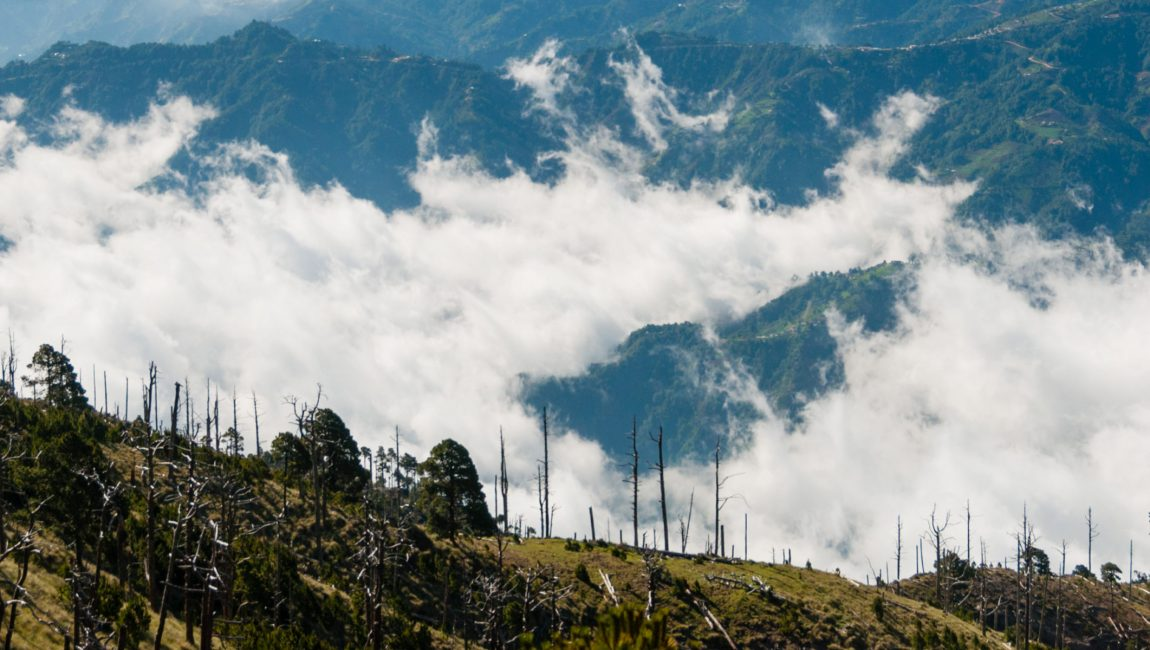 Some Trees on green slope in front of a big blue mountain Tajamulco with cloudscape