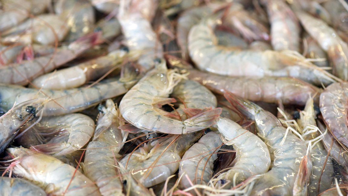 Shrimp exposed in fish market