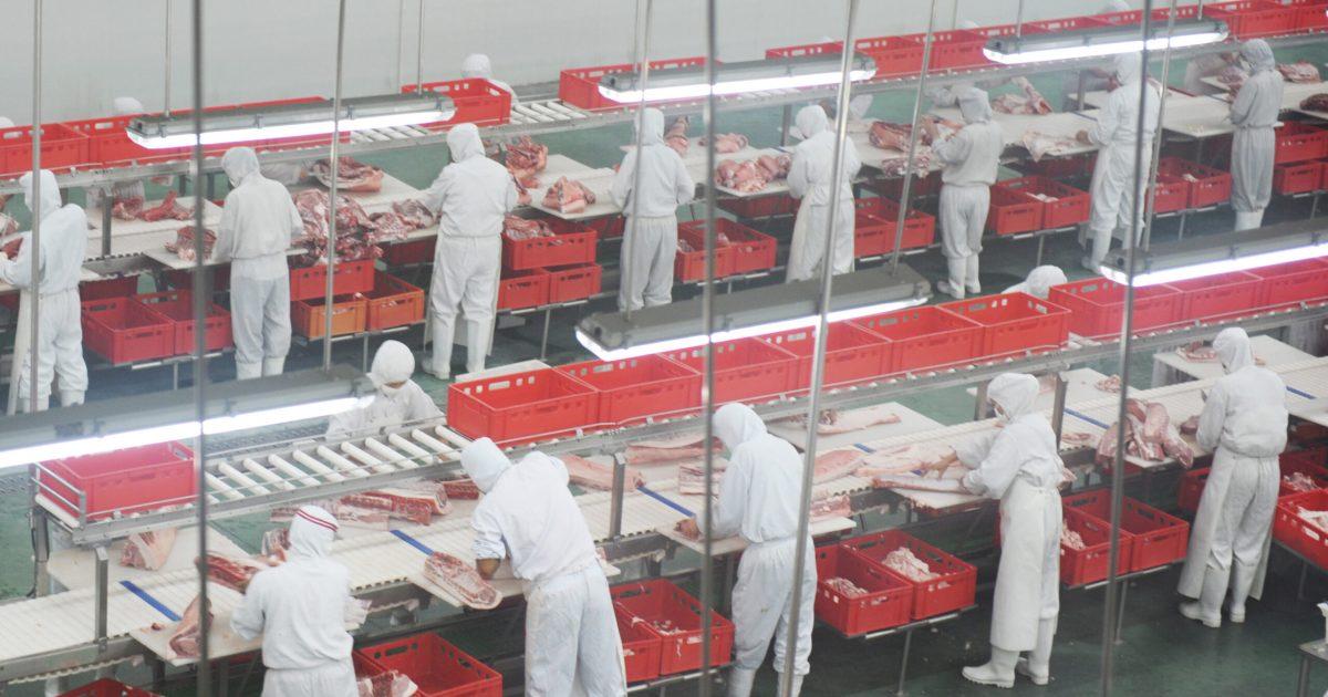 Des travailleuses et travaillaeurs d'abattoirs