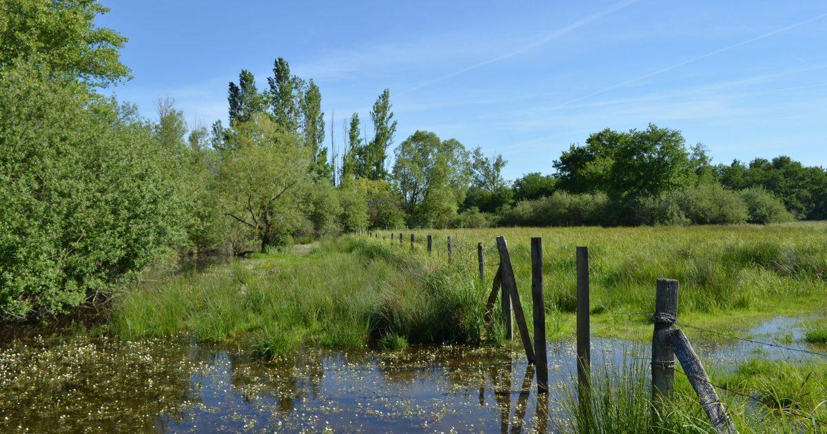 Marais de Morlin a Taluyers (69)
